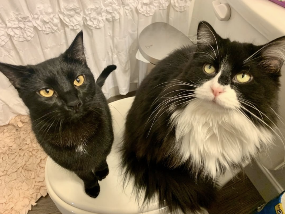 Picture of Willa and Lupin, cats, in the #PetsOfHerbert Competition.