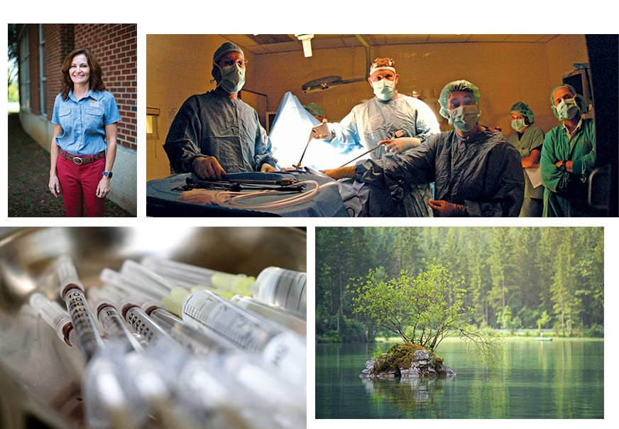 A collage of One Health issues, including veterinary medicine, opioid and substance abuse, and the environment.